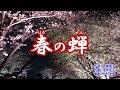 『春の蝉』若山かずさ カラオケ 2019年6月19日発売