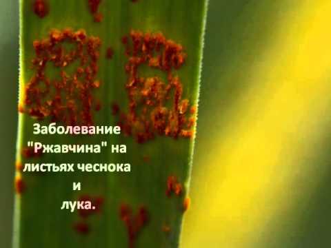 Грибковые заболевания растений. Лечение.