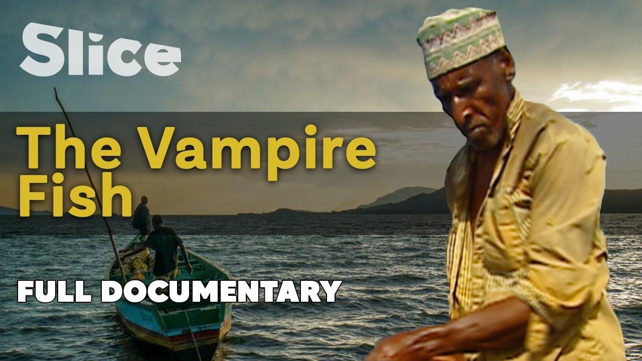 Download The Vampire Fish I SLICE I Full documentary