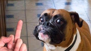 Dog Really Hates Middle Finger Compilation