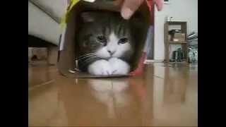 странный японский кот!.avi