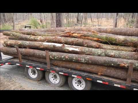 Taking Logs To The Mill