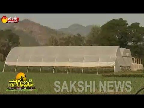 Sakshi Sagubadi 18th January 2017 || Polyhouse Farming Profits And Advantages