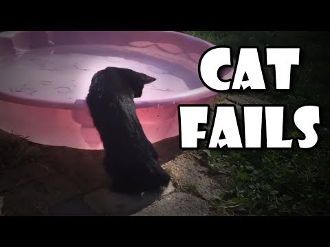 Funny Cats Compilation - Cat Fails and funny videos October 2018