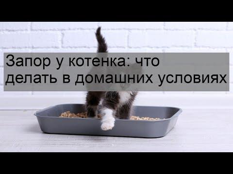 У котенка запор у котенка что делать в домашних условиях