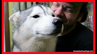 HAPPIEST MEMPHIS DOG EVER