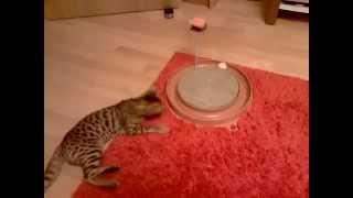 """Супер игрушка для кошек, трек с мячиком """"Лаки Китти"""""""