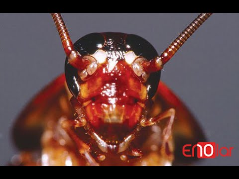 Hamam Böcekleri Hakkında Muhtemelen Daha Önce Duymadığınız 10 Enteresan Bilgi