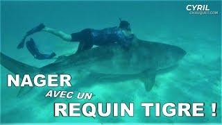CAPTURER & NAGER AVEC UN REQUIN-TIGRE ! - Cyril Chauquet