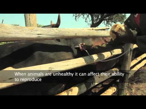 Building Livestock Farmer Resilience in Emergencies