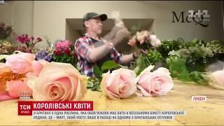 Історії ТСН. Королівські весільні секрети: важливість квітів на королівських весіллях у Британії