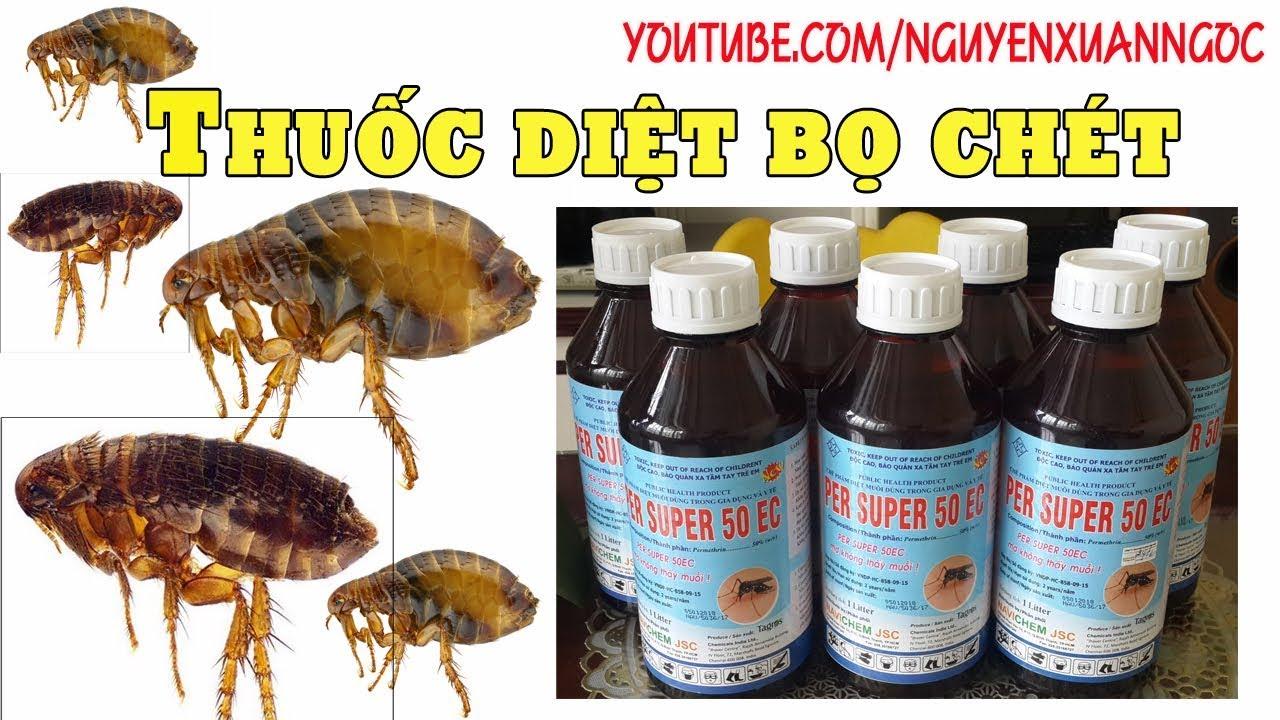 Thuốc diệt bọ chét – Hướng dẫn sử dụng thuốc diệt bọ chét HIỆU QUẢ NHẤT