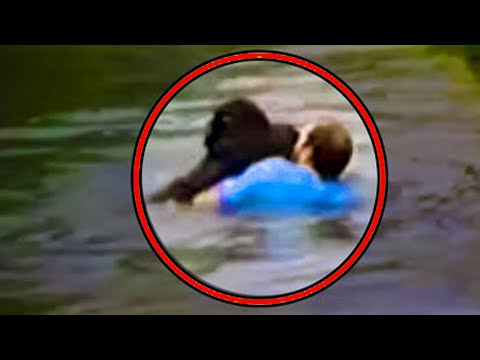 He Risked His Life By Jumping Into a Zoo Enclosure