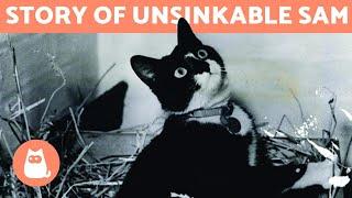 The CAT that SURVIVED 3 SHIPWRECKS 🚢🐱 (Unsinkable Sam/Oskar)