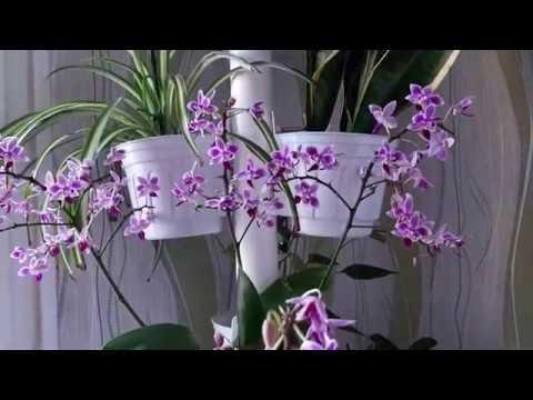 Горшки для орхидей своими руками из подручных материалов фото
