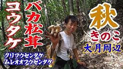 【大月周辺】キノコ狩り 秋きのこ