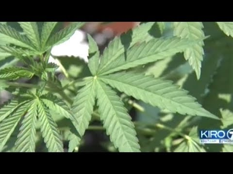 Lawmakers Move To Block Washington State Funds From Being Used In Federal Marijuana Crackdown!