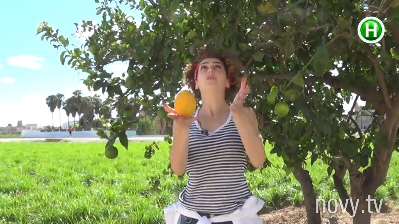 За эту не пыльную работенку в Испании платят 2 | лето развлекательная программа