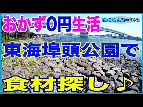 【おかず0円生活】京浜運河•東海埠頭公園で食材探し♪