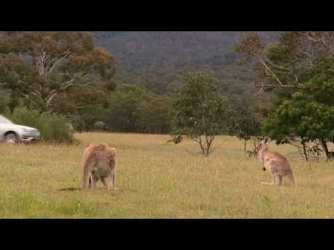 Volvo Cars Australian Tests for Kangaroo Safety Research
