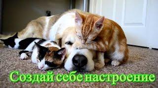 Кошки,котята.Смешное видео для детей Позитив. Создай себе хорошее настроение