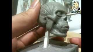 How To Sculpt Ecorche Hercules - Part 42 Facial Muscles - Orbicularis Oculi,Masseter Muscle