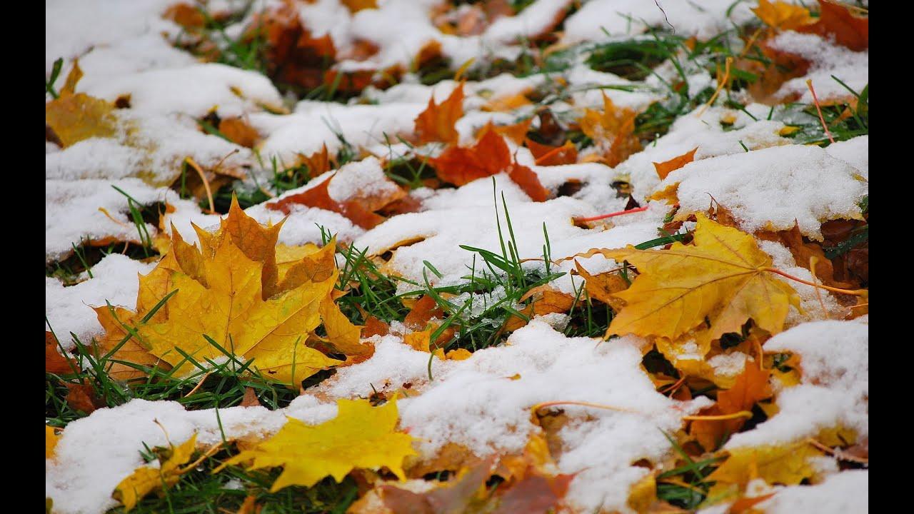 Картинки на рабочий стол снежная осень