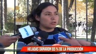 HELADAS DAÑARON 85% DE LA PRODUCCIÓN