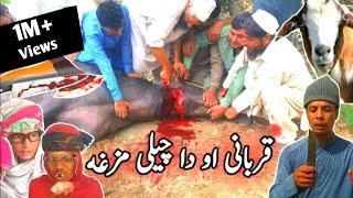 Ght Akhtar Qurbani Aw Da Chiliy Mazghaa || Pashto Funny Video  By Tuti Gull Vines