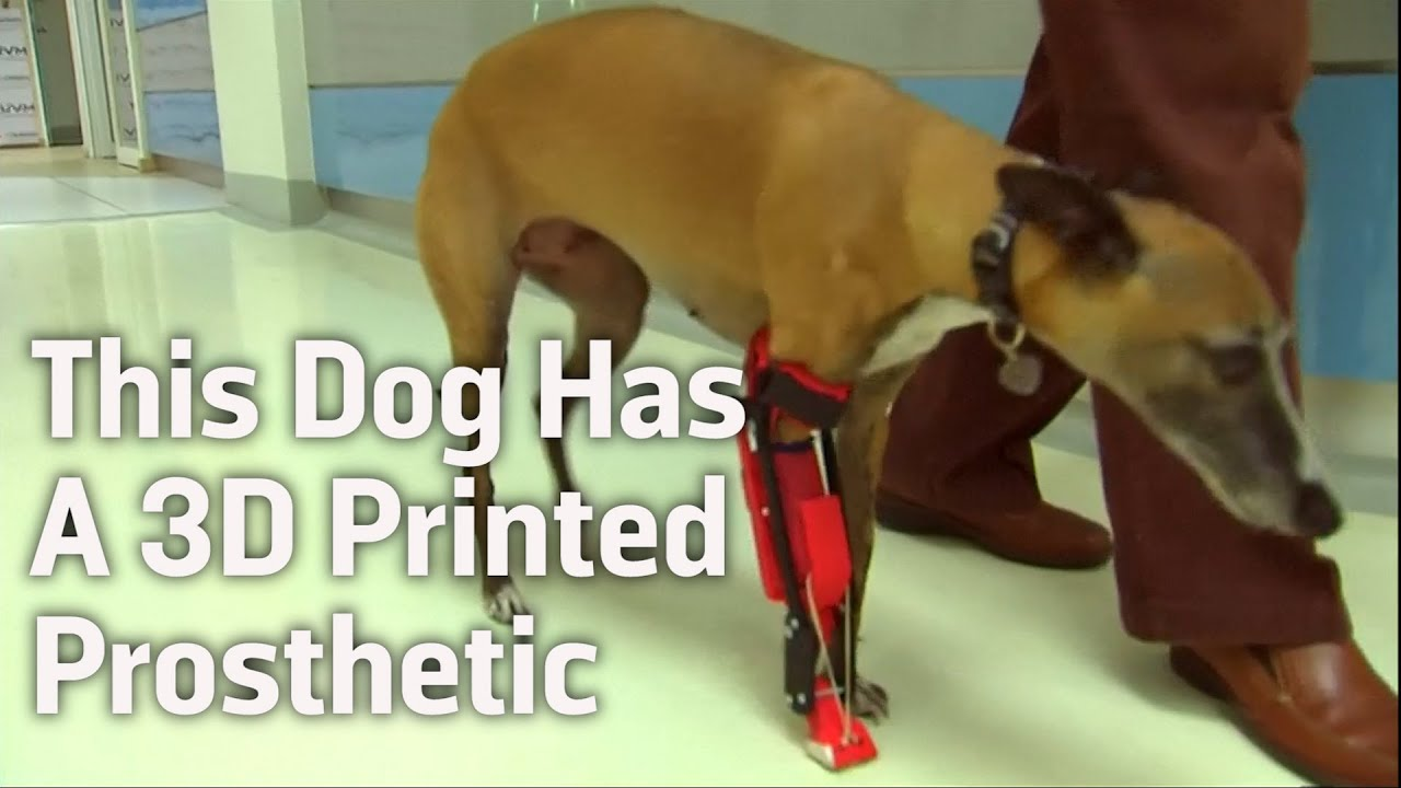 canine prothesis Dog with prosthetic paw---© orthopets legs, beaks animal prosthetics are a relatively new phenomenon, and their technology is improving at a rapid pace.