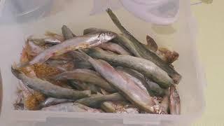 ВЯЛЕНАЯ МОЙВА, КАК ВЯЛИТЬ РЫБУ ЗИМОЙ, отличная закуска к пиву от Fisherman DV. 27 RUS
