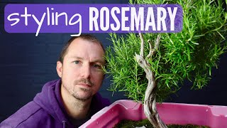 Rosemary Bonsai Material Pruning and First Styling a Collected Rosemary Part 1