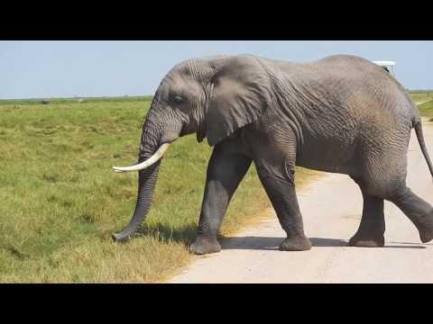 africa 216: kenya & zanzibar gopro