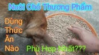 Lựa Chọn Và Chế Biến Nguồn Thức Ăn Tr๐ng Nuôi Chó Thịt