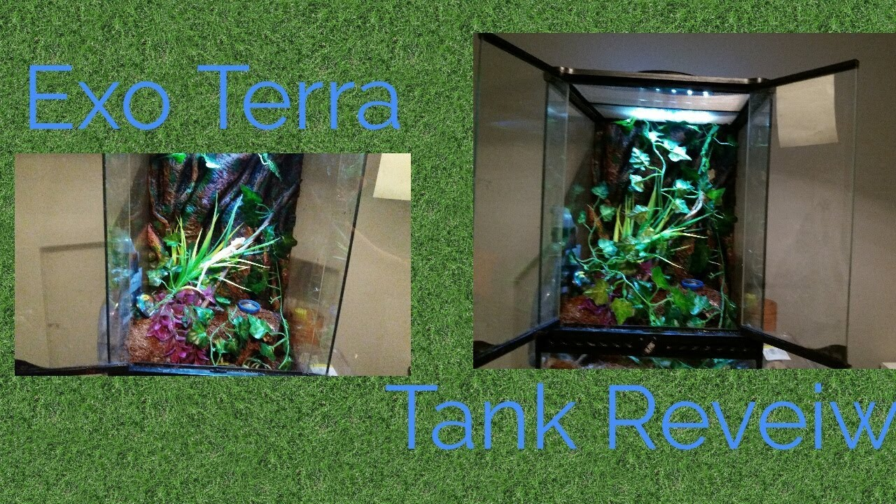 Review Crested Gecko Exo Terra 12 By 12 By 18 Tank Youtube