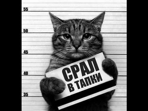 Смешные КОТЫ - Лучшие приколы / Funny cats compilation ...