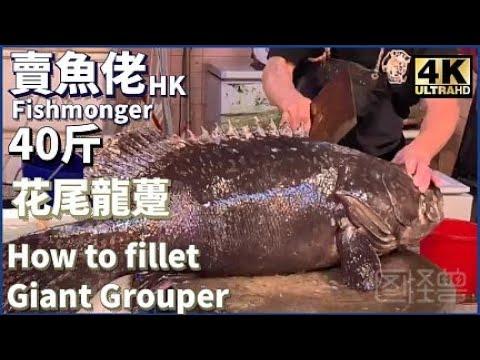 【西環魚王 4K】慶祝休漁期結束 40斤花尾龍躉  Cutting 40kg Wild Giant Grouper at Hong Kong Wet Market 【ノーカット】巨大きな魚 漁民海鮮