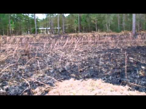 Post-prescribed burn images from Savannah/Pitcher Plant Bog, Crosby Arboretum, January 17, 2012
