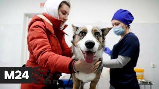 В России зарегистрировали первую в мире вакцину против COVID-19 для животных