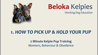 How to hold a pup - 2 MIN Kelpie Pup Training