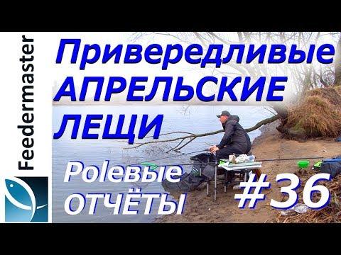 Привередливые апрельские лещи на фидер. Рыбалка на реке