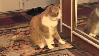 Рыжий кот с улицы. Каким он стал.