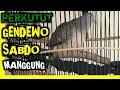 Perkutut Manggung Gendowo Sabdo Gacor Untuk Pikat Suara Burung Perkutut  Mp3 - Mp4 Download