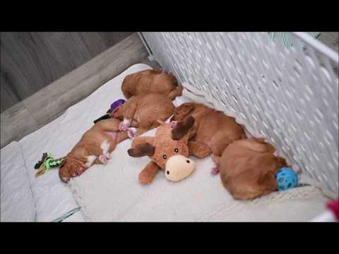 Deseree's Puppies Present: Tug Life