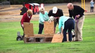 Westie Races - Fun Daze Seattle Wa - Video 3