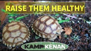 Sulcata Tortoise Health