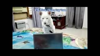 Funny Dog / (Humor) Video