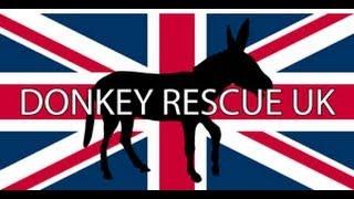 Major Mackerel. Donkey Meat