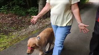 A Dog Training Collar That Works! Safecalm.com Big Chuck Mcbride