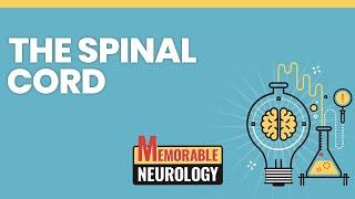 Spinal Cord Mnemonics (Memorable Neurology 8)